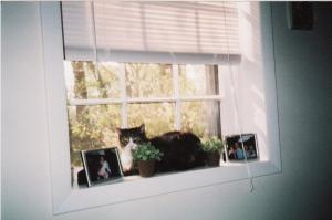 Opie sitting in his favorite spot...the window seat basking in the sunlight.