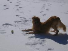 Ramsey enjoying the snow