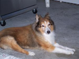 Lost our best friend on Nov 20, 2009