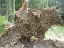 Strong winds caused more than 800 power outages in Wake and Sampson counties on Sunday, June 13, 2010.