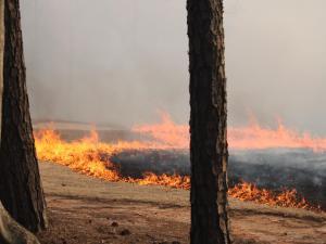 Wakefield fire