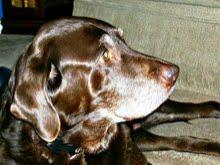 In memory of a very loved dog. Just know we always will love you sweetheart! Have fun chasing ducks in heaven!