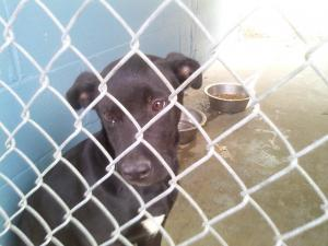 Found stray dog, had been mistreated. Needs good home/foster by Friday, May 13th. Call 910-286-9298, leave voicemail and your call will be returned as soon as possible.