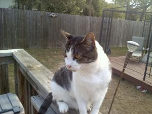 Smokey Rest in Peace August 23,2011
