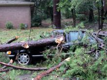 Streets flooded, trees toppled and a dorm was damaged as Hurricane Irene swept across the ECU campus.