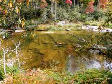WRAL viewers share their favorite photos of the changing colors of fall.