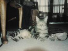 Bo Kitty from Chapel hill