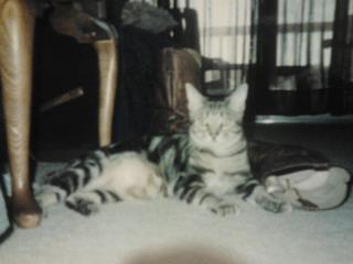RIP= Bo Kitty.