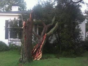 Storm Damage in the Speed area of Edgecombe County. Tree on my Dad's house. Edgecombe County took a major hit from the storm. Tree's down across roads all over the county. Similar to Irene.