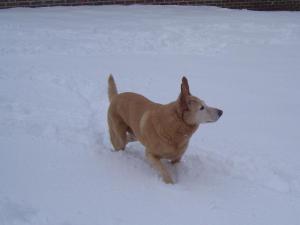 Petie in the snow