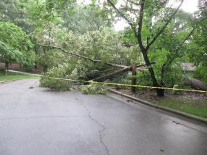 A large tree pulled out of the wet ground and snapped a light pole blocking the street, BARCROFT. Additional Photos