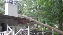 IMAGES: Storm winds down trees in Raleigh, Cary