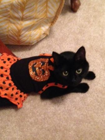 Eloise is ready for tricks and treats!