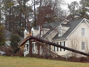 Tree down in a yard on Hardimont Road near St. Albans Drive, North Hills.  Notice how it is twisted!