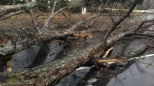 Storm damage Jan. 11, 2014