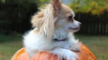 IMAGES: Howloween Pet Photos