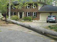 Picture of fallen tree blocking driveway