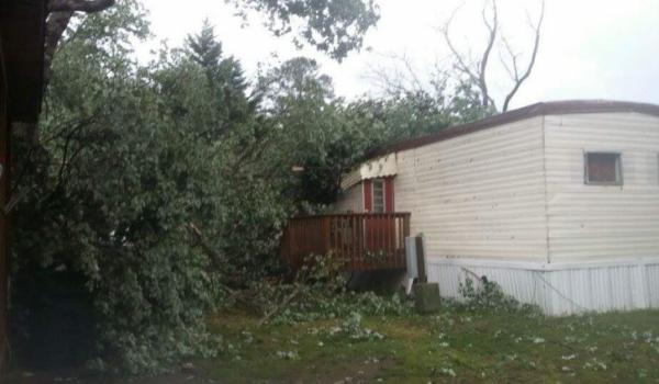 Tree fell on mobile home