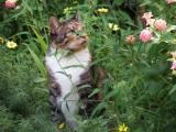 Cat likes hiding in flowers