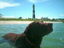 Mako at the Lighthouse