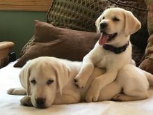 Pet Photos June 2017