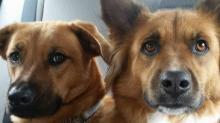 IMAGES: Pet Photos June 2017