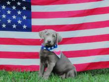 July 4th Pet photo