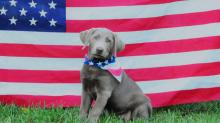 IMAGES: Your photos: Pets, kids celebrate July 4th