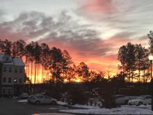 Morning glory from Rolesville