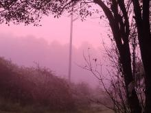 pink tinted fog  this morning near  spring forest rd
