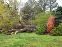 Storm damage photos: Downed trees, ominous clouds, hail as severe storms roll through NC