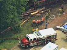 A driver died Thursday afternoon when his logging truck hit a guardrail on the inner Beltline, went down an embankment and crashed into a tree.
