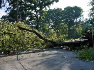 Authorities blocked a section of East Franklin Street near UNC-Chapel Hill Friday morning after a large tree fell across the road.