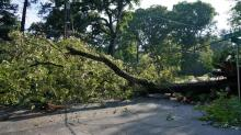 IMAGES: Downed tree blocks portion of Franklin Street near UNC campus