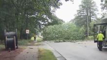 IMAGE: Wade Avenue reopens after fallen tree closed road