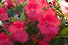 Photo by: Jennifer E. Beautiful flowers