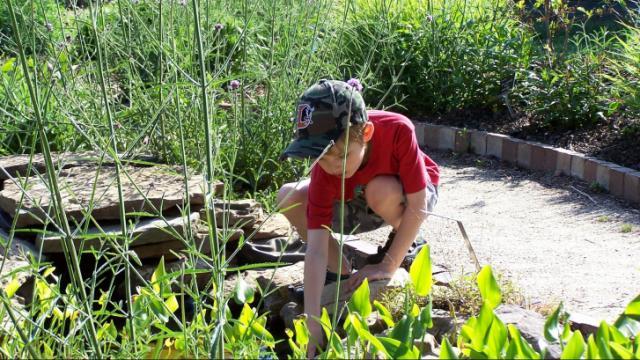 Photo by: Trent Walker Sr. Trent Walker II explores the JC Raulston Arboretum