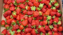 IMAGE: State Farmer's Market celebrates Strawberry Day