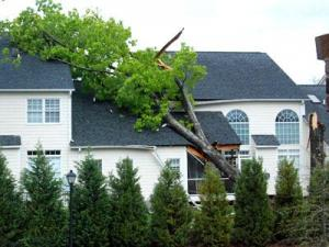 Sunday's storms knocked a tree onto a North Raleigh home. (Photo: Steven Weigensberg)