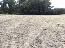 Future Uncertain for Farmers' Winter Crops