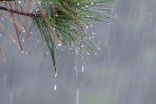 Rain showers fell on Wednesday October 24 throughout the triangle, helping the area down a long road to recovering from the summer drought.