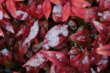 WRAL.com visitors sent in their photos of the first snowfall of 2008.