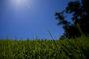 Photo showing beautiful blue skies over green grass.