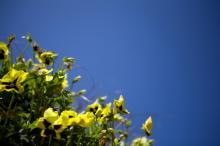 Yellow flowers near the WRAL Azalea Gardens.