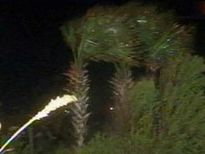 An image of palm trees bending in North Myrtle Beach, S.C. during Tropical Storm Hanna on Sept. 6, 2008.