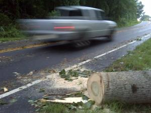 High winds downed trees in southern Wake County Monday afternoon.