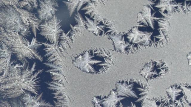 Frost photo from Ruffin Blackard, taken early on Feb 1, 2010.