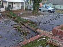 'Ferocious wind' topples trees, could make driving dangerous