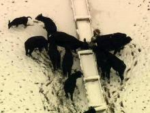 Sky 5 aerial of Johnston County cattle farm