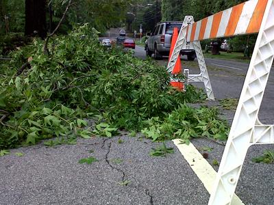 A storm knocked down trees along North Duke Street in Durham on June 23, 2010.